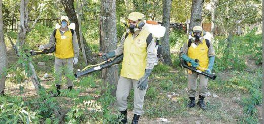 El Senado de Paraguay declaró la Emergencia Nacional por el dengue