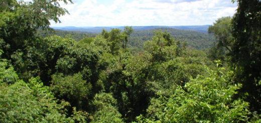 Con foros y reconocimientos, la agenda forestal de la UNaM se movilizará el 21 de marzo para celebrar el Día Internacional de los Bosques
