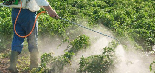 San Pedro: Buscan crear nueva ordenanza para mayor control sobre el uso de agroquímicos