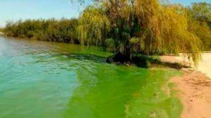 Gualeguaychú: Preocupa la aparición de algas en el río Uruguay y la municipalidad pidió informe a la CARU por efluentes de la pastera UPM-Botnia