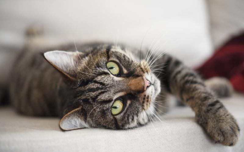 Atroz video: metió un gato en el lavarropas y subió las imágenes a Instagram