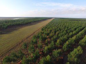 Cluster forestal: Corrientes destina a industrias de Misiones y Entre Ríos un promedio de dos millones de toneladas anuales de madera