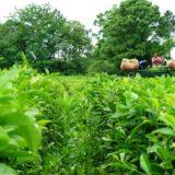 Destacan el fuerte trabajo en el agregado de valor y diversificación  del té misionero para ampliar el mercado