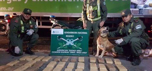 Despacharon encomiendas con droga desde Puerto Iguazú a Buenos Aires: un detenido