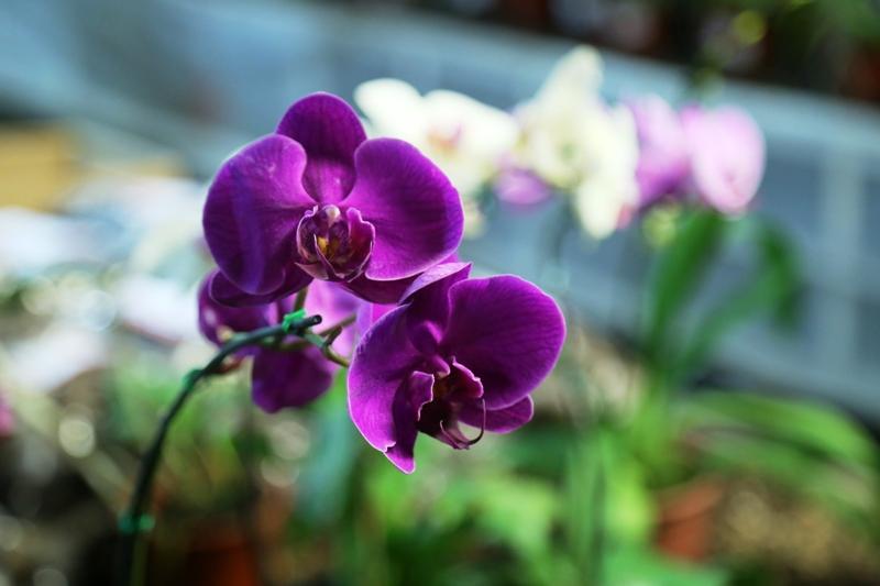 La Biofábrica honrará a las mujeres con una Feria de orquídeas y ornamentales