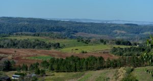 Restauración de paisajes boscosos: Posadas será sede en octubre del encuentro de científicos de la red mundial IUFRO y del INTA