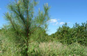 Agenda forestal en Misiones: El ministro Garay recibirá hoy al director nacional de Foresto-industria
