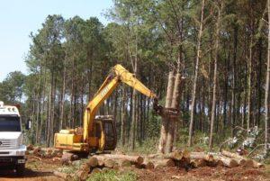 Mario Elizondo: ¿Más allá de la Ley 25.080, la Argentina forestal podrá ser una realidad o continuaremos sin una política nacional?