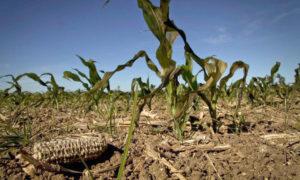 La sequía en las provincias argentinas golpea al campo y preocupa a los productores