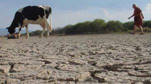 Proceso acelerado de degradación de suelos empujará a la migración de millones de personas