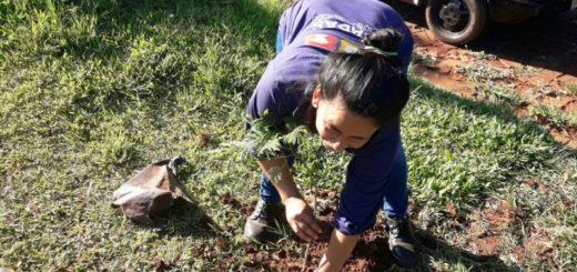 Programa 10.000 árboles: el municipio posadeño plantó 20 nuevas especies en la chacra 113