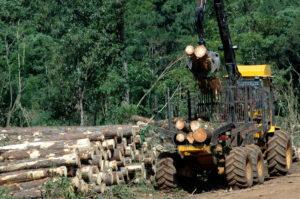 "Jaime Ledesma:""El gran desafío institucional pasa por consensuar a nivel país una clara política forestal de Estado"""