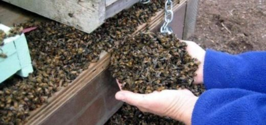 Conmoción en Córdoba por la muerte repentina de 72 millones de abejas