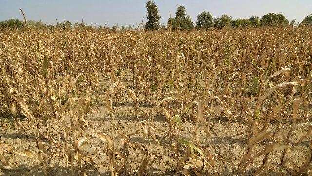 El Gobierno recibió el pedido para que declare la emergencia agropecuaria en Salta y Entre Ríos