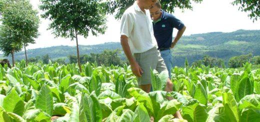 Volverán a censar a productores tabacaleros de San Vicente y El Soberbio