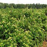 """""""El sector cooperativo está en contra de la desregulación en la actividad yerbatera"""", afirmó el presidente de la FEDECOOP"""