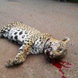 El tráfico de especies sería el tercer negocio ilícito más rentable en el mundo