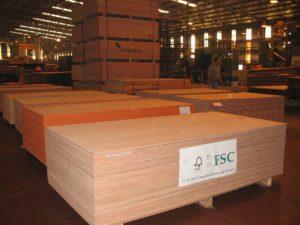 Greenpeace retira su adhesión al FSC, el mayor sello mundial de certificación de Manejo Forestal Sostenible del cual fue uno de los fundadores