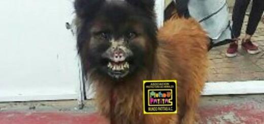 La terrible historia del perro que vivió 6 años atado a un árbol, comía basura y lo quemaron con ácido