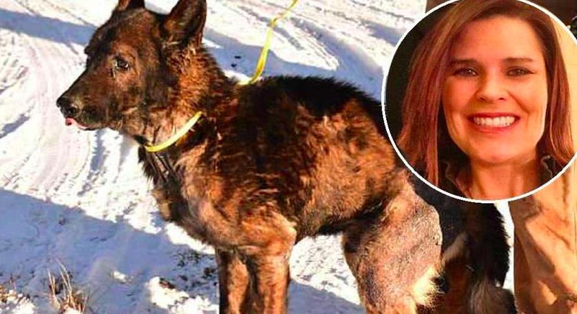 Condenaron a prisión a una mujer por matar de hambre a sus perros y volverlos caníbales