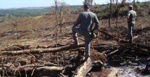Una grave denuncia en Ecología que abre también una oportunidad para cambios de fondo en los controles forestales