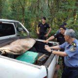 Desaparecieron 540 kilos de marihuana y esta fue la insólita explicación de dos jefes policiales