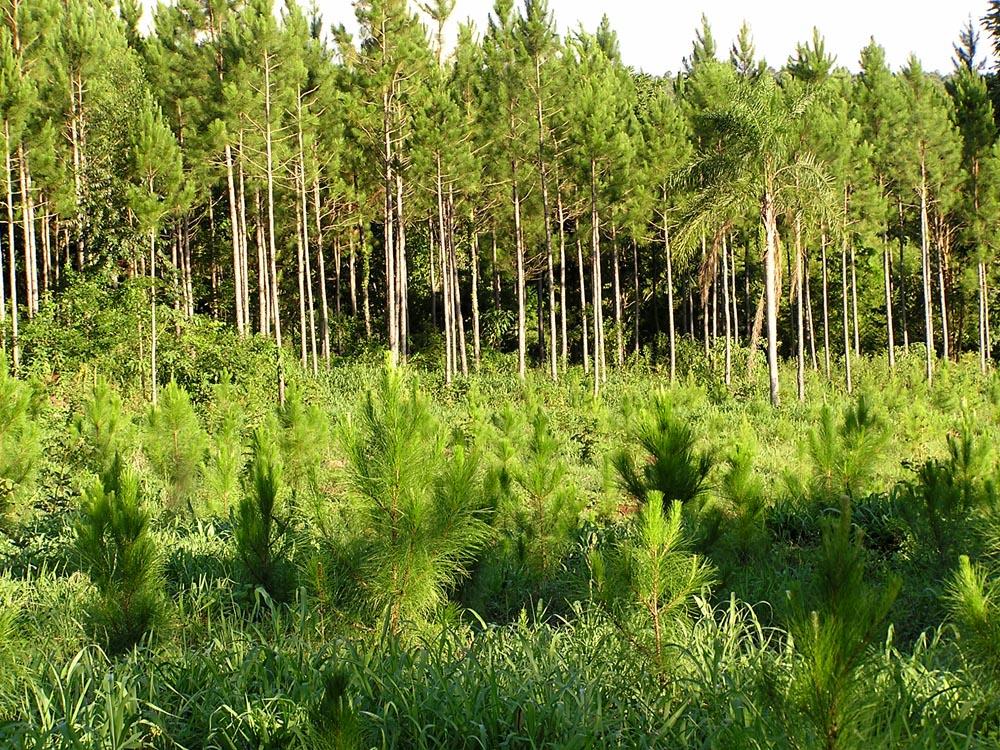 Gobierno provincial ejecutará más de 70 millones de pesos para la mejora de la competitividad de aserraderos Pymes y reunirá a la Mesa Forestal por debatir continuidad de la Ley 25.080