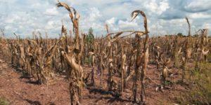 Consideran a la sequía que afecta a gran parte de la región centro del país como la peor en 50 años