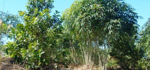 En Pozo Azul quieren suplantar el tabaco por producción frutihortícola