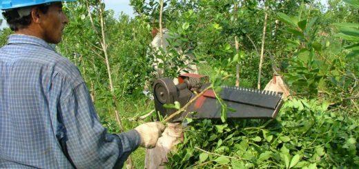 """""""Repudiamos la idea de liberar los precios de la yerba mate"""", dijo el productor Enrique Kuzko"""