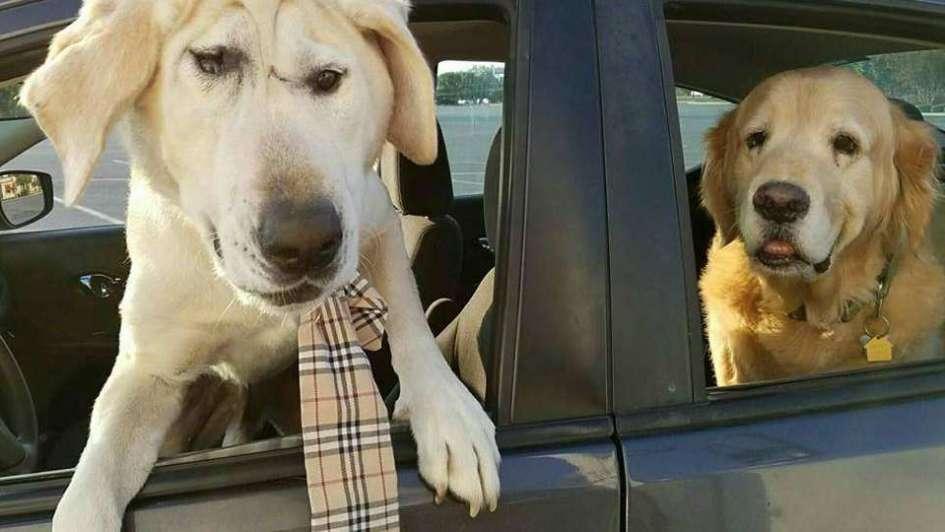 Viral: la conmovedora historia de Beaux Tox, el perro rechazado por feo