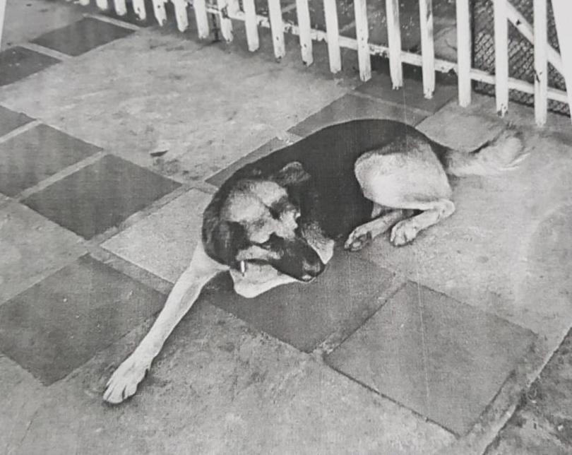 Insólito: piden la detención de un perro en Wanda