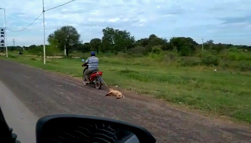 Video: ató su perra a la moto, la arrastró durante kilómetros, pero fue rescatada y se encuentra en adopción