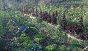 Dictarán un taller gratuito sobre técnicas culturales y producción de semillas con enfoque agroecológico