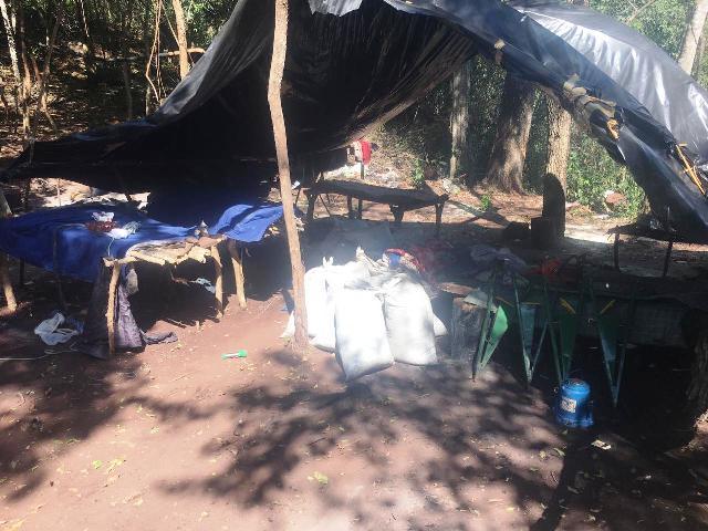 Narcotráfico en la Frontera: destruyen 2 hectáreas de cultivo de marihuana y hallan 790 kilos ya prensada