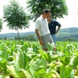 Tabaco: por la suba del dólar, los productores piden una reunión para fijar un nuevo precio