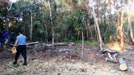 Iguazú: En operativo conjunto de Policía y guardaparques secuestraron maderas nativas de una propiedad
