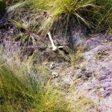 Intenso trabajo de laboratorio para identificar a la persona cuyos restos óseos aparecieron en el barrio Prat de Posadas