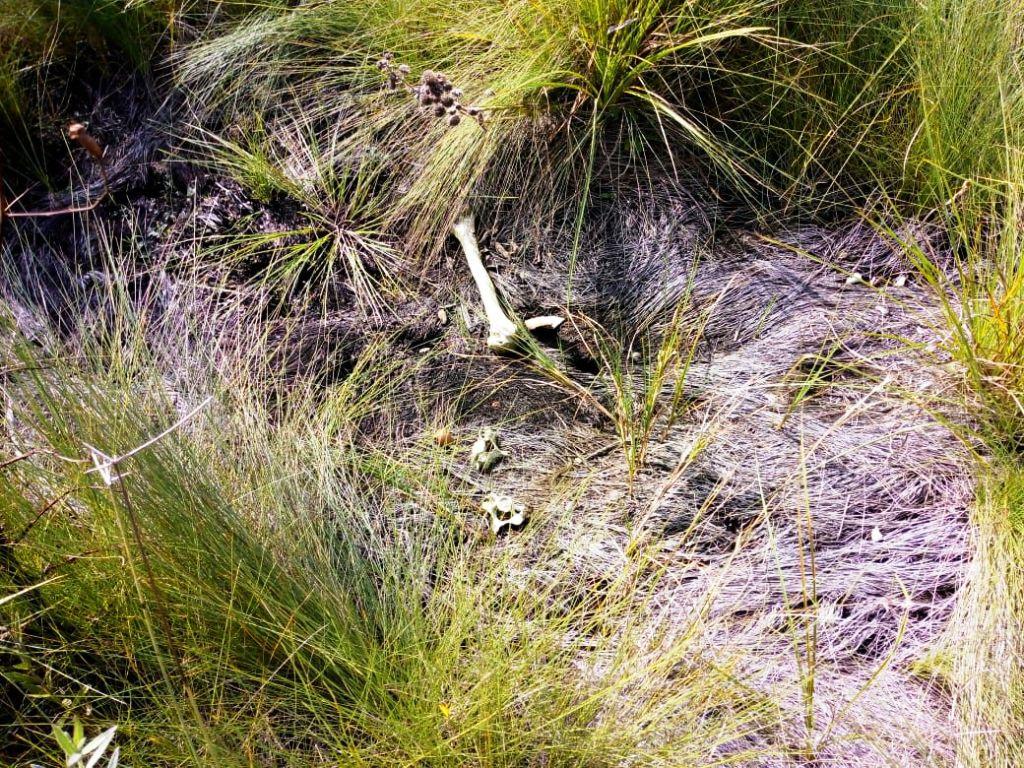 Hallan restos óseos en el barrio Prat de Posadas: investigan si es de alguna persona desaparecida en los últimos meses