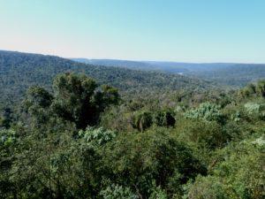 Passalacqua en la Legislatura: lea los puntos principales en políticas ambientales para la conservación y protección de la selva misionera