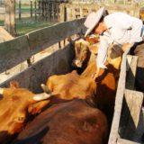 Instituciones suman esfuerzos para mejorar la sanidad de la producción lechera
