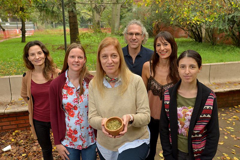 Científicos de de la UBA lograron un extracto de yerba mate para usar en jugos