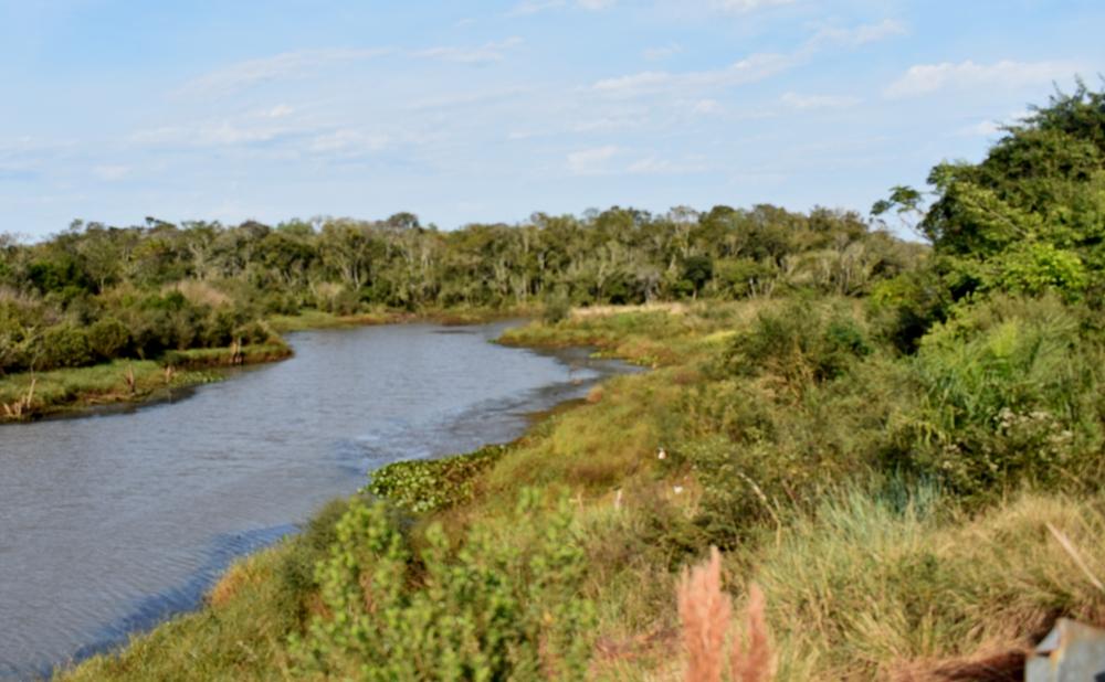 Más de 240 especies de aves habitan en la Reserva Natural Urutaú de la EBY, entre raras veces vistas, amenazadas y difíciles de observar en la Argentina