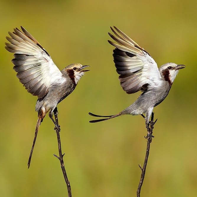 La EBY mantiene unas 150 mil hectáreas de reservas naturales para conservación y recuperación de la biodiversidad