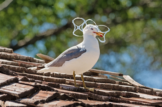 Un planeta #SinContaminación por plásticos es el lema del Día Internacional del Medio Ambiente 2018