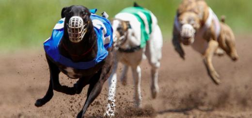 Un galgo ganó una carrera con un tiempo extraordinario y descubrieron que había sido drogado con cocaína