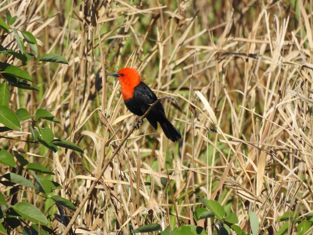 Yacyretá presenta la reserva natural Urutaú