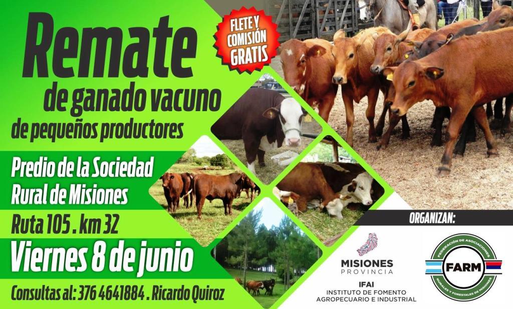 Con 600 cabezas de ganado se hará el primer remate de pequeños y medianos productores