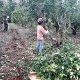 Registro de productores y de yerbales en San Pedro, Andresito y Oberá