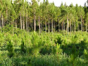 Nación destinó a Misiones nueva partida de pago de planes forestales por más de 12 millones de pesos